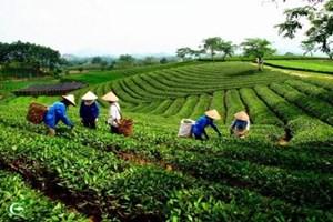Sắp xếp các công ty nông lâm trường đạt kết quả tích cực