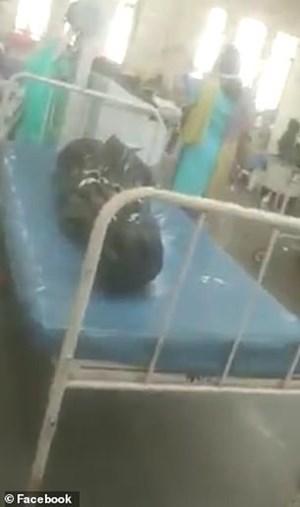 [VIDEO] Bệnh nhân Covid-19 nằm cạnh xác chết trong bệnh viện