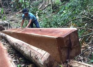 Kon Tum: Cách chức 1 Phó Giám đốc và kỷ luật 3 cán bộ vì để phá rừng