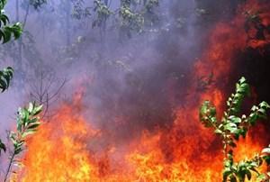 [VIDEO] Thừa Thiên - Huế: Liên tiếp xảy ra cháy rừng nghi do đốt thực bì