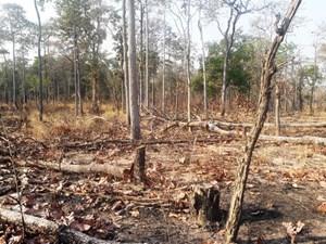 Thêm một Trưởng ban quản lý rừng bị khởi tố
