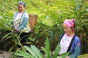 BẢN TIN MẶT TRẬN: Sơn La phát triển kinh tế, giảm nghèo bền vững