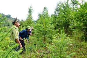 Giải pháp phát triển rừng đặc dụng, phòng hộ