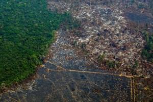 Diện tích rừng Amazon bị chặt phá  lớn nhất trong vòng 5 năm qua