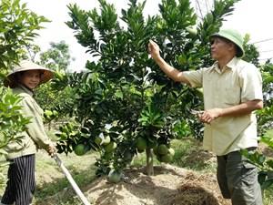 Lãng phí tài nguyên đất ở các nông, lâm trường: Kỳ cuối: Mấu chốt là ở cơ chế