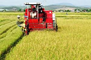 Giải pháp sống còn cho nông sản
