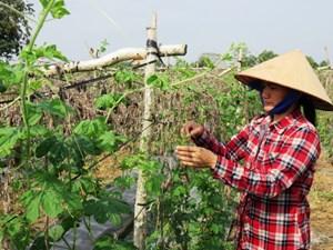 Chuyển đổi cây trồng để tháo gỡ khó khăn