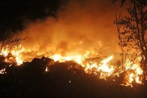 Bình Thuận: Cháy lớn tại Khu bảo tồn thiên nhiên Tà Cú