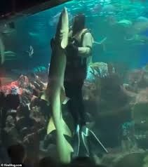 Khiêu vũ cùng cá mập