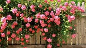 Cao nguyên hoa
