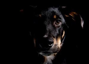 Độc đáo ảnh viện dành riêng cho vật nuôi tại Ukraine