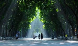 Đời cây, đời người và di sản