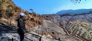 Giám đốc BQL rừng phòng hộ thuê người đốt thực bì gây ra cháy 33 ha rừng