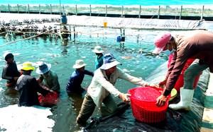 Đón làn sóng chuyển dịch sản xuất mới cho ngành tôm