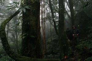 Gìn giữ rừng xanh