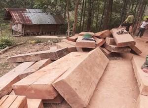 Quảng Trị: Phát hiện nhiều khối gỗ vô chủ ở bìa rừng