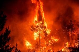 Lâm Đồng: Kịp thời dập tắt đám cháy rừng trên núi Đại Bình