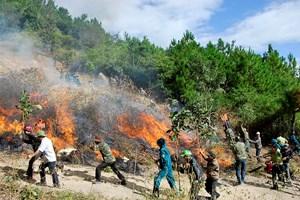 Kiểm tra, rà soát kỹ các phương án phòng cháy, chữa cháy rừng