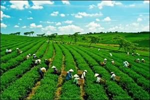 Thúc đẩy nông nghiệp số