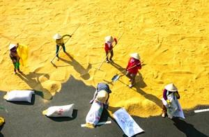Minh bạch xuất khẩu gạo
