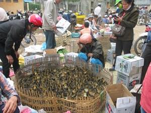 Lạng Sơn: Bắt giữ nhiều gia súc, gia cầm nhập lậu