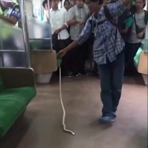 Người hùng tay không bắt rắn trên tàu điện ngầm