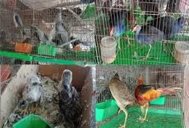 Kiểm soát chặt chẽ động vật hoang dã nhập lậu
