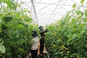 Phấn đấu có 1.500 hợp tác xã nông nghiệp công nghệ cao vào năm 2020