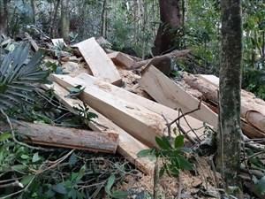 Gia Lai: Kiểm tra thông tin về phá rừng tại huyện Kông Chro
