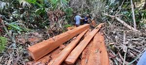Quảng Nam: Làm rõ vụ phá rừng tại huyện Bắc Trà My