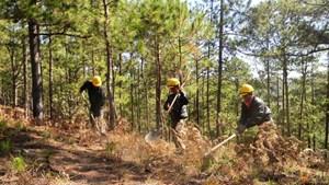 Đẩy mạnh phòng, chống cháy rừng mùa khô hạn
