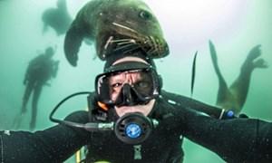 Sư tử biển nghịch ngợm cắn đầu thợ lặn dưới nước