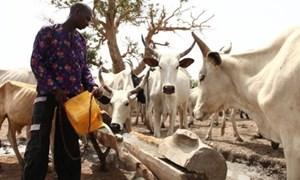 Thảm sát ở Nigeria, 86 người chết