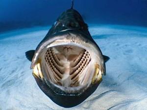 Thợ lặn chộp được khoảnh khắc bên trong miệng một con cá mú