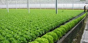 TP HCM thiếu lao động nông nghiệp công nghệ cao
