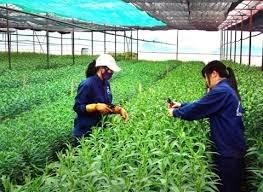 Trên 160 tỷ đồng đầu tư vào nông nghiệp công nghệ cao