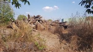Vụ 8.000 m3 gỗ để mục nát ở Bình Phước: Sẽ kiểm điểm, xử lý những cá nhân, tập thể liên quan