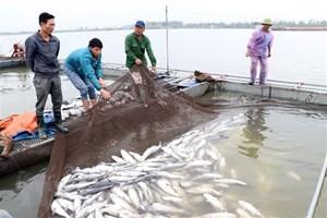 Cá trên sông Mã chết hàng loạt một cách bất thường
