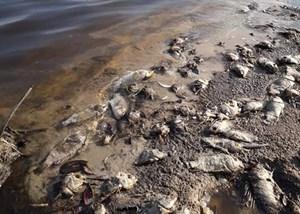 Xuất hiện cá tự nhiên chết hàng loạt tại hồ đập Dàng
