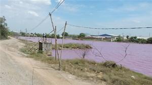 Bà Rịa - Vũng Tàu: Hồ nước đổi màu nghi bị ô nhiễm