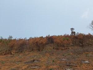Ban quản lý rừng đốt thực bì, cháy lan vào rẫy của dân