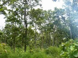 Bảo vệ, khôi phục và phát triển rừng Tây Nguyên