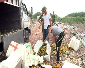 Bắt giữ và tiêu hủy hơn 2,4 tấn thực phẩm nhập lậu tại Quảng Ninh