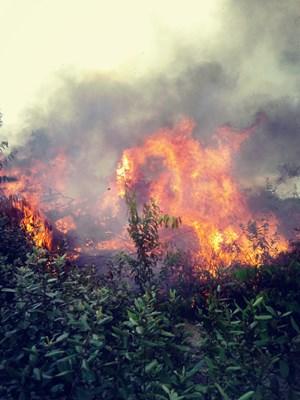 Nghệ An: Một người chết khi tiếp nước cho lực lượng chữa cháy rừng