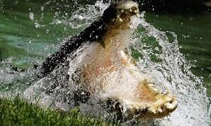 Cụ ông 72 tuổi 'chiến đấu' với cá sấu trong 3 giờ
