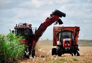 Cuba khôi phục hoạt động sản xuất đường