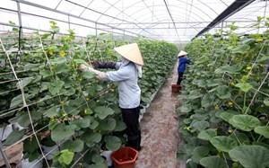 Đầu tư nông nghiệp công nghệ cao: Vẫn cần tháo gỡ nhiều rào cản