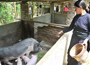 Gánh nặng môi trường chăn nuôi