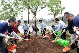 Hà Nội: Trồng thêm 1.000 cây hoa anh đào tại Công viên Hòa Bình