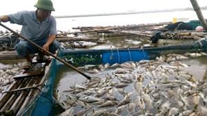 Hà Tĩnh: Cá và hàu chết hàng loạt, thiệt hại tiền tỷ